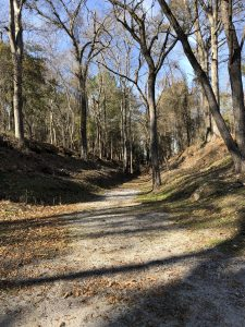 A photograph of a wooded area with a gravel trail in the middle.
