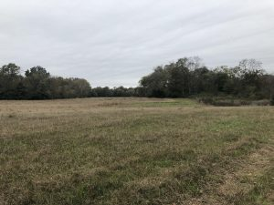 This photograph is of a field that feeds into Callaway Creek, near the Coosa River in Elmore County, Alabama. It is believed to be the last known location where Lewis Hendricks was alive.